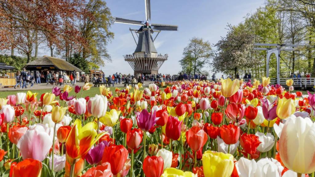Bloemen met molen op achtergrond