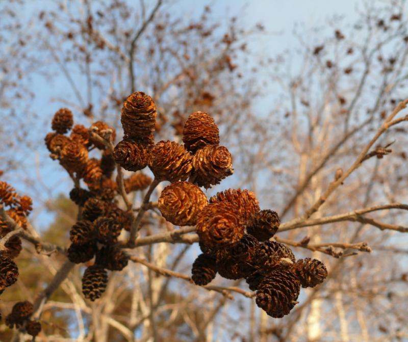 """Schippersblog """"De natuur komt langzaam weer tot leven in februari"""""""