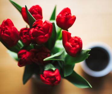 "Schippersblog ""Tulips from Holland"""