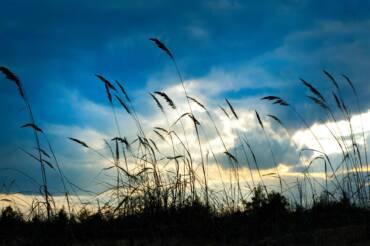 """Schippersblog """"De wind van voren"""""""